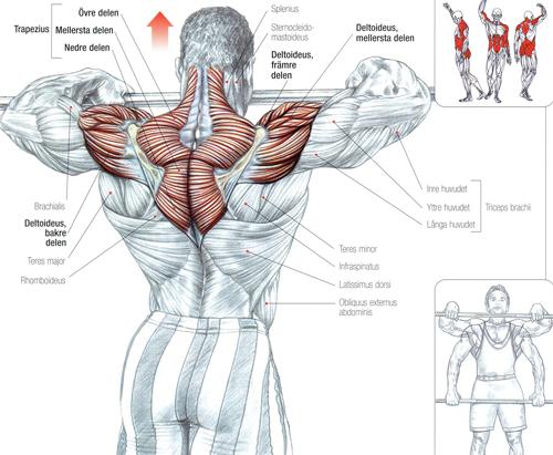 Как накачать спину и шею в домашних условиях