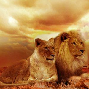 Большой курс Исцеление Внутреннего Льва